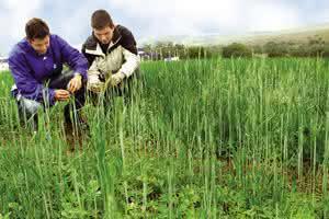 engenharia agronomica - agronomia