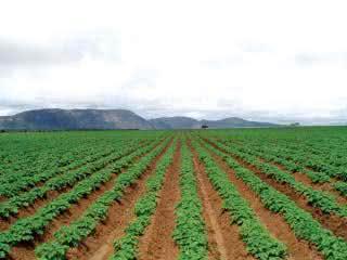 nota de corte agronomia