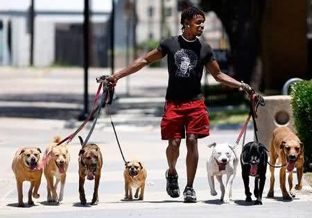 Dicas para ganhar dinheiro Cuidando de Cachorros