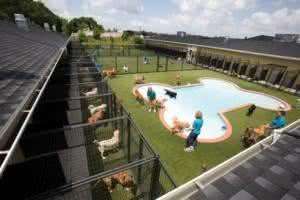 Como montar um Hotel para animais?