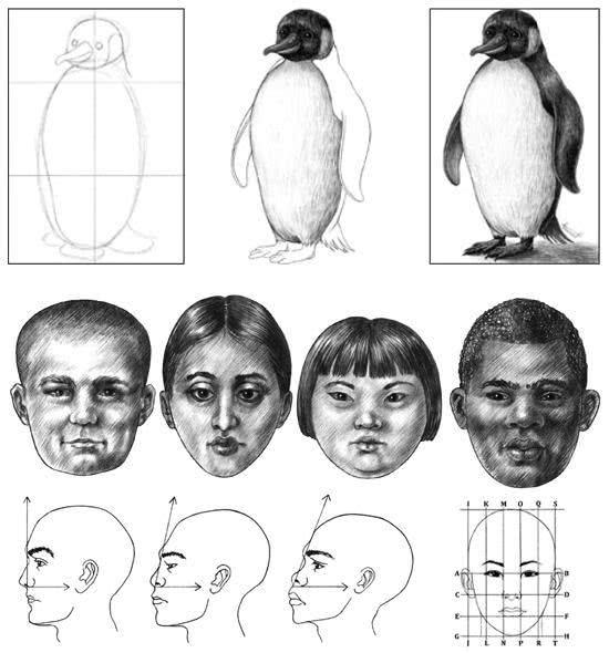 dicas para aprender a desenhar